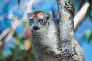 Naturparadies Madagaskar