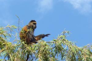 Ruanda - Ein Naturparadies entdeckt sich wieder
