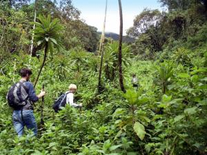Ruanda • Uganda • Tansania - Berggorillas, Serengeti und Mafia Island