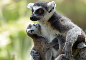 Rundreise & Baden - Madagaskar