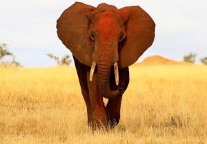 Rundreise & Baden - Tansania, Kenia, Sansibar