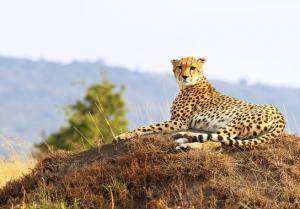 Rundreise & Baden - Tansania, Kenia