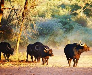 Safari durch vier Länder - Glanzlichter des Südlichen Afrikas (Campingtour)