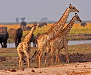 Safari durch vier Länder - Glanzlichter des Südlichen Afrikas (feste Unterkünfte)