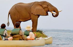 Sambia - Naturfotografie in Perfektion