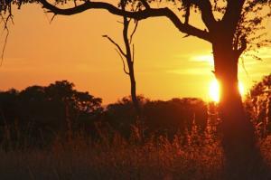 Sambia - Raue Pisten, sanfte Pfoten