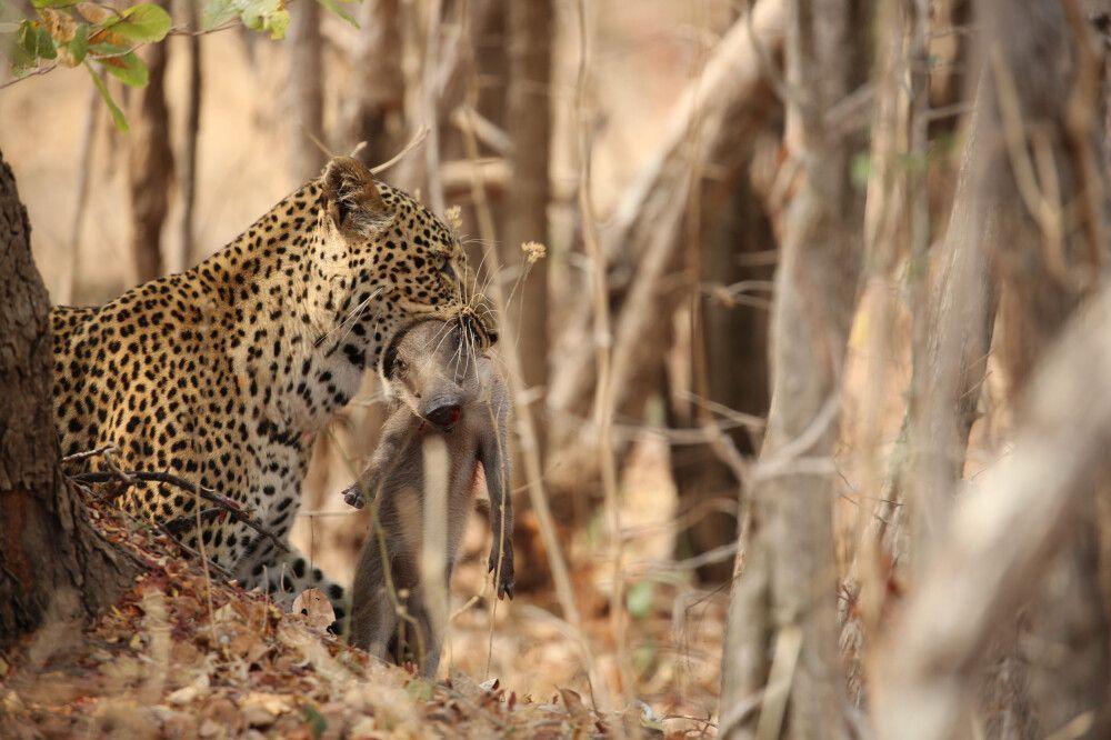 Sambia • Malawi • Mosambik • Südafrika - Entlang der Handelsroute