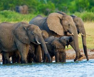 Simbabwe & Botswana - Grandiose Wasserfälle