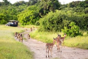 Simbabwe - Botswana - Afrikas Schätze vom Hausboot und auf Pirsch entdecken