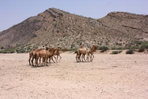Somaliland - Im Land der Soomaali