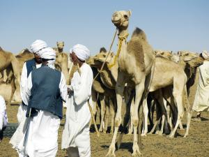 Sudan - Durch das Land der Beja-Nomaden