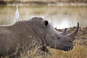 Südafrika, Mosambik & Swasiland: Höhepunkte