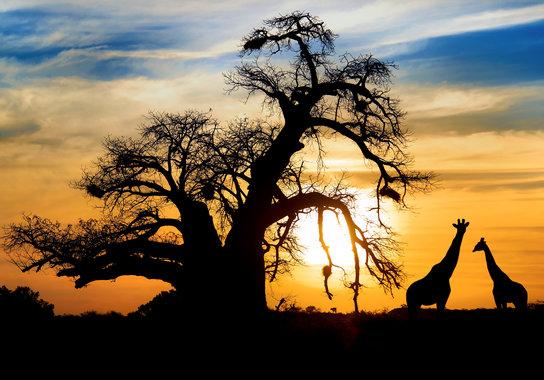Südafrika, Simbabwe & Botswana Rundreise