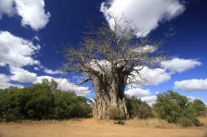 Südafrika & Botswana: Höhepunkte mit Victoria-Fällen