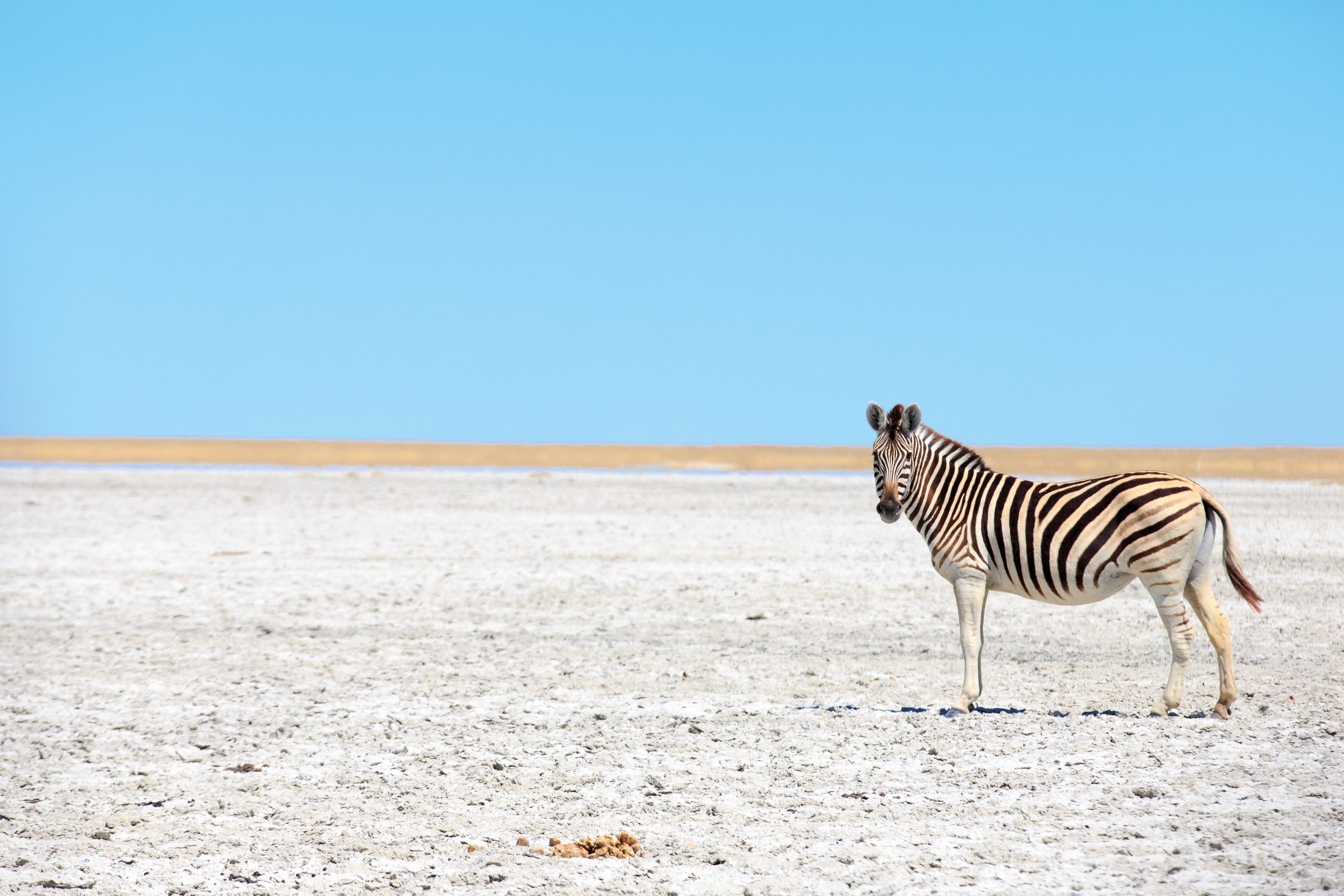 Südafrika & Botswana: Höhepunkte mit Victoriafällen