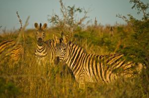 Südafrika  -  Faszination Wildnis