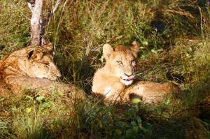Südafrika  -  Vom Krügerpark bis zur Gartenroute