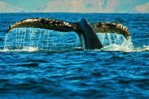 Südafrika: Die ausführliche Reise auf der Gardenroute