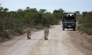 Südafrika: Gartenroute und Krüger Park