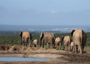 Südafrika: Höhepunkte