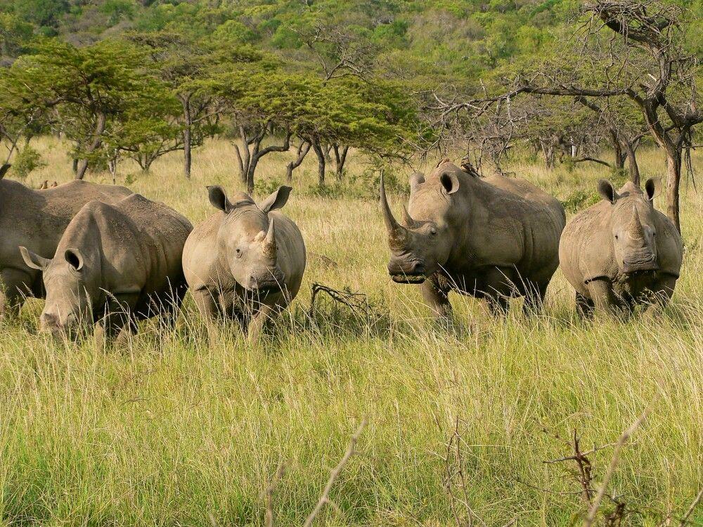 Südafrika • Mosambik - Tropische Strände und afrikanischer Busch
