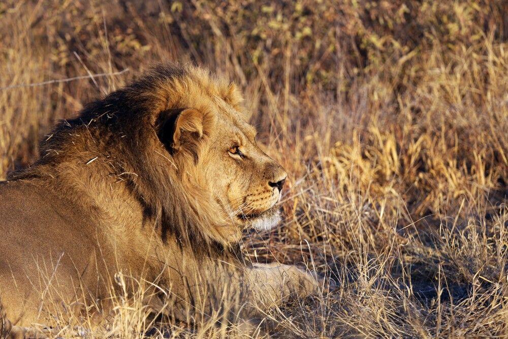 Südafrika • Namibia • Botswana • Simbabwe - Vom Sambesi bis zum Kap