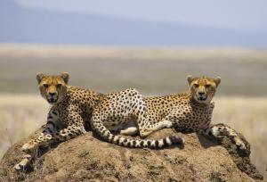 Südafrika: Natur & Kultur