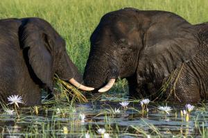 Südafrika • Simbabwe • Botswana - Entdeckungen im Safariparadies