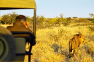 Südafrika • Simbabwe • Botswana - Entdeckungen im Safariparadies als Campingsafari