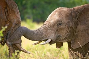 Südafrika • Swasiland • Lesotho - Highlights vom Krüger-Nationalpark bis Kapstadt