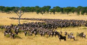 Tansania & Sansibar: Höhepunkte