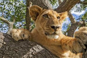 Tansania - Löwen, Land und Leute
