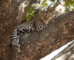 Tansania - Safari-Erlebnis im Norden