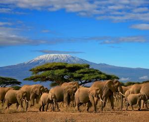 Tansania - Safari und Sansibar