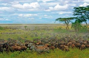 Tansania - Von der Serengeti nach Sansibar