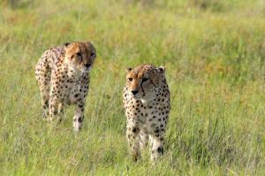 Tansania - Wandern auf dem Massai Trail und Safari