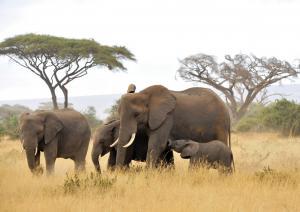 Tanzanias Atemberaubende Tierwelt