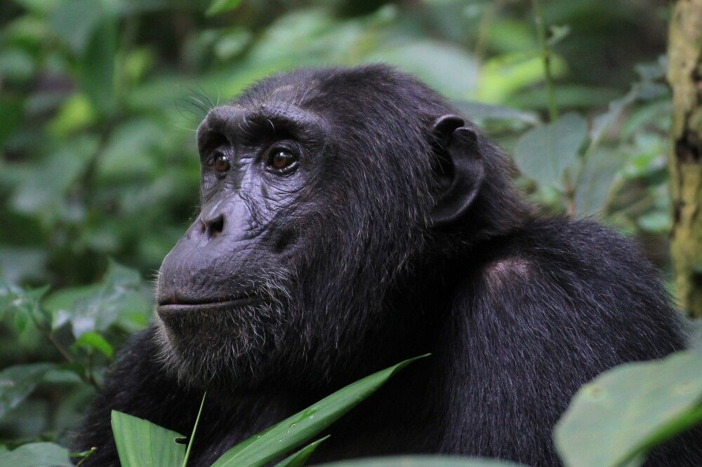 Uganda - Best of Uganda
