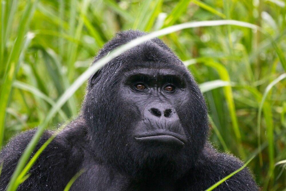 Uganda - Best of Uganda und Murchison-Nationalpark