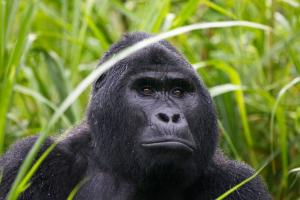 Uganda - Best of Uganda und Murchison-Nationalpark