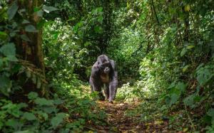Uganda - Die Perle Afrikas (ab August 2019)