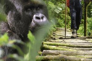 Uganda - Ruanda - Auf Entdeckungsreise entlang der Großen Seen