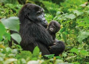 Uganda: Höhepunkte