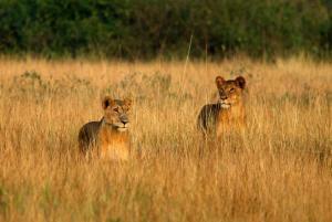 Uganda • Tansania - Best of Uganda und Sansibar