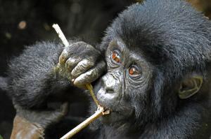 Uganda • Tansania - Ins Grüne Herz Afrikas und auf die Insel Sansibar