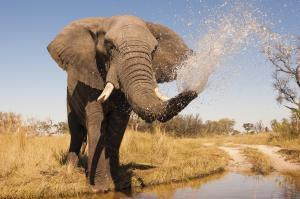 Ursprüngliches Botswana