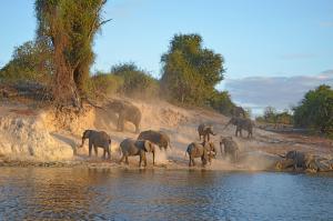 Victoria Falls und Chobe Nationalpark