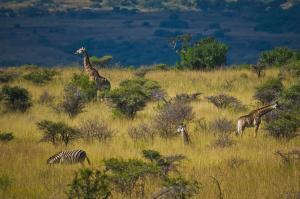 Vom Krüger-Nationalpark bis an die Küste