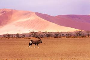 Von den Victoria-Fällen in die Namib-Wüste